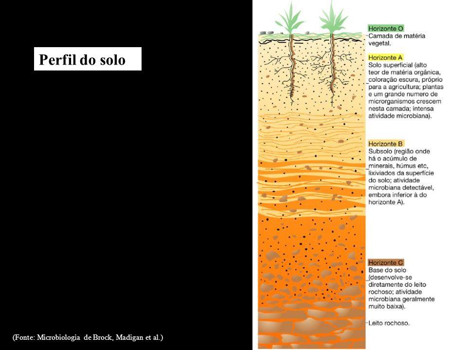 Perfil do solo (Fonte: Microbiologia de Brock, Madigan et al.)