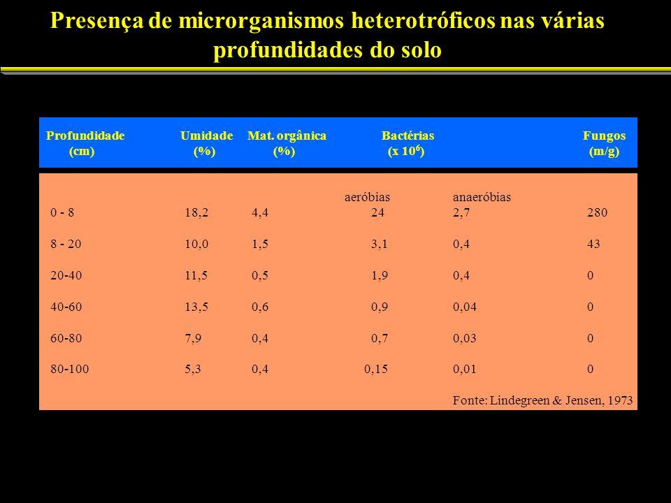 Presença de microrganismos heterotróficos nas várias profundidades do solo Profundidade UmidadeMat. orgânicaBactériasFungos (cm) (%) (%) (x 10 6 ) (m/