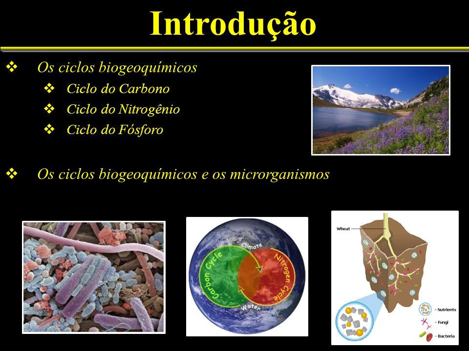 Introdução Os ciclos biogeoquímicos Ciclo do Carbono Ciclo do Nitrogênio Ciclo do Fósforo Os ciclos biogeoquímicos e os microrganismos