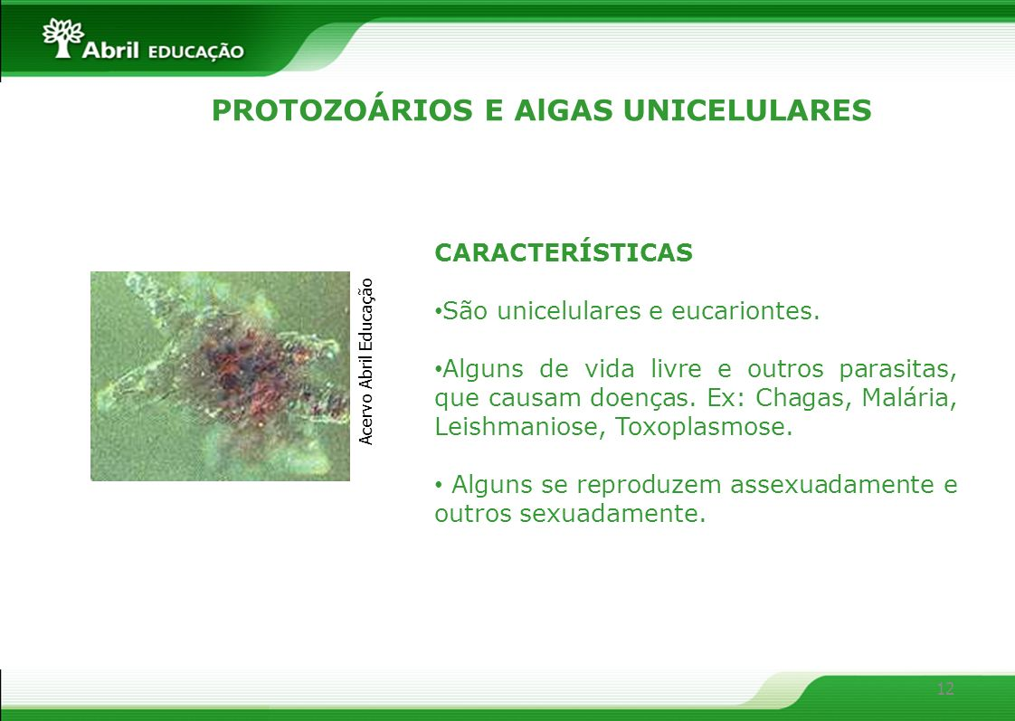 12 PROTOZOÁRIOS E AlGAS UNICELULARES CARACTERÍSTICAS São unicelulares e eucariontes. Alguns de vida livre e outros parasitas, que causam doenças. Ex: