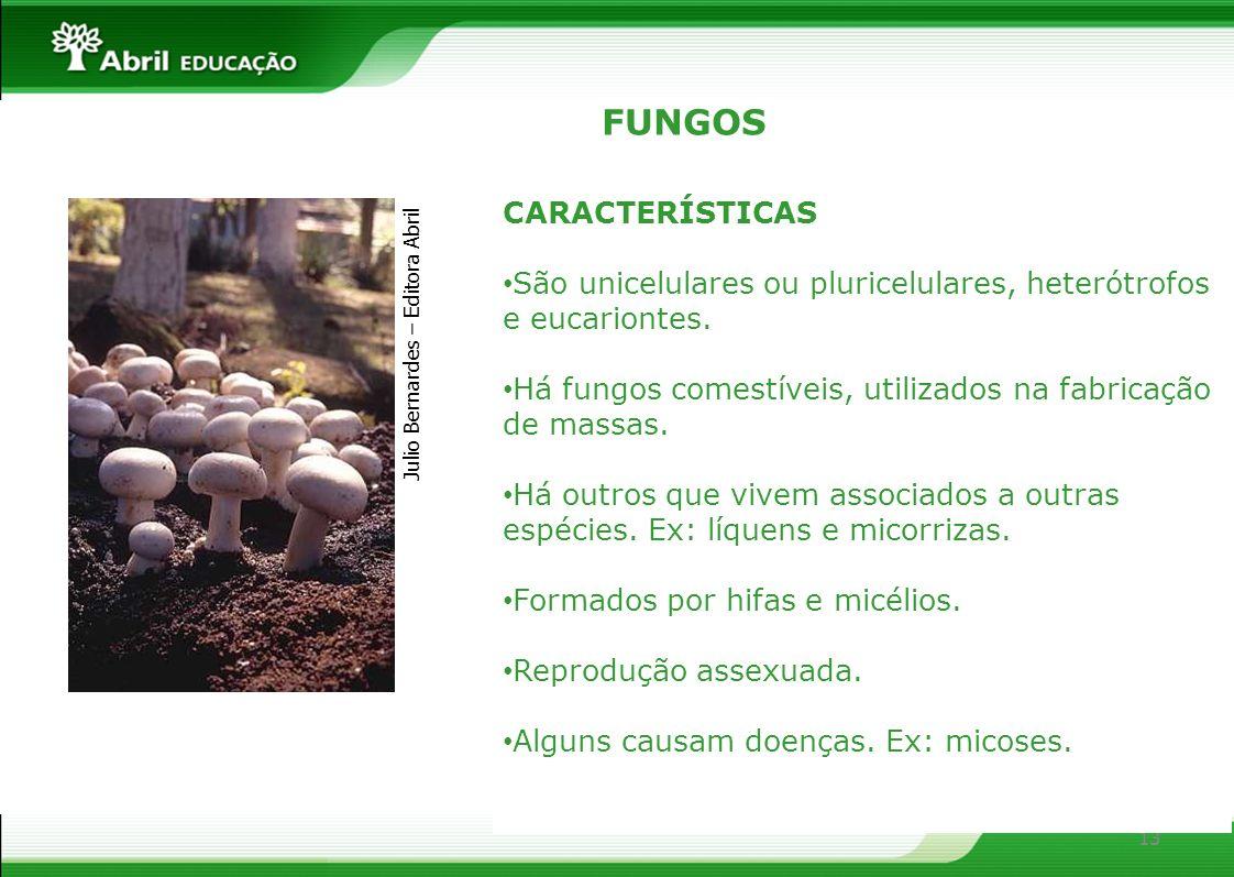 13 FUNGOS CARACTERÍSTICAS São unicelulares ou pluricelulares, heterótrofos e eucariontes. Há fungos comestíveis, utilizados na fabricação de massas. H