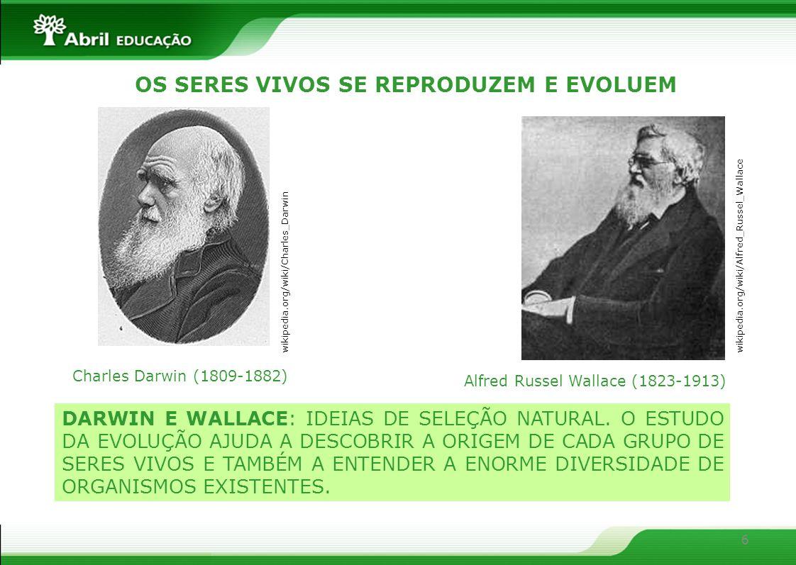 6 DARWIN E WALLACE: IDEIAS DE SELEÇÃO NATURAL. O ESTUDO DA EVOLUÇÃO AJUDA A DESCOBRIR A ORIGEM DE CADA GRUPO DE SERES VIVOS E TAMBÉM A ENTENDER A ENOR