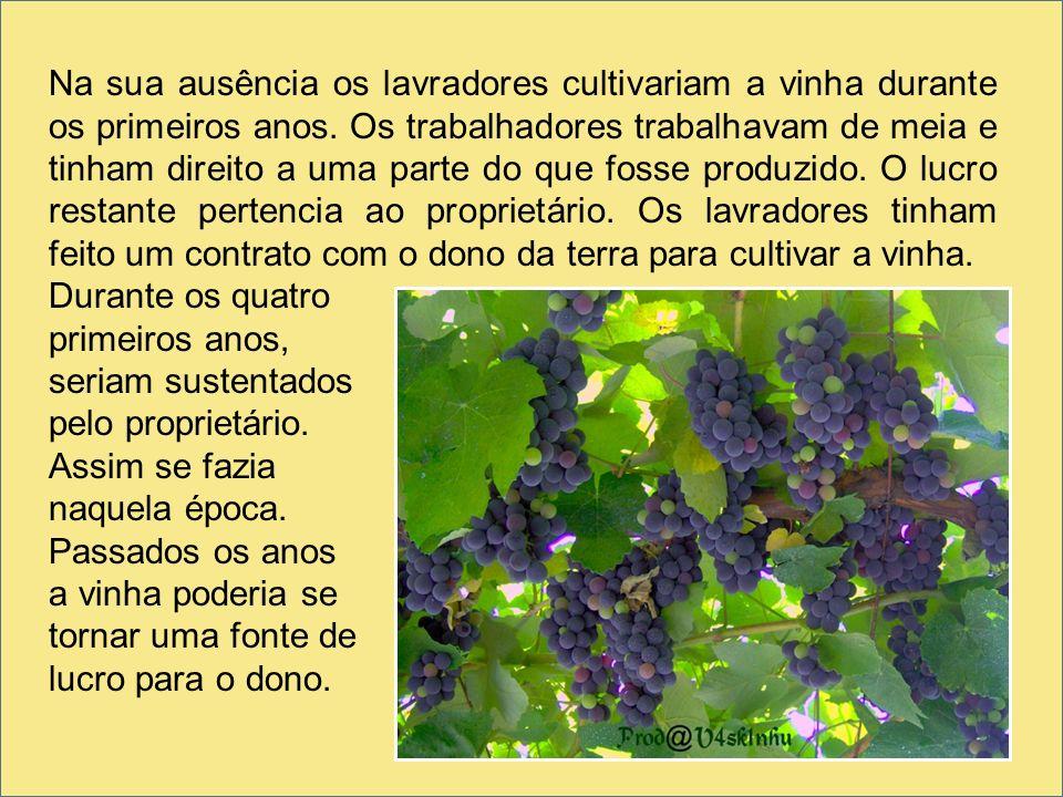 Na sua ausência os lavradores cultivariam a vinha durante os primeiros anos. Os trabalhadores trabalhavam de meia e tinham direito a uma parte do que