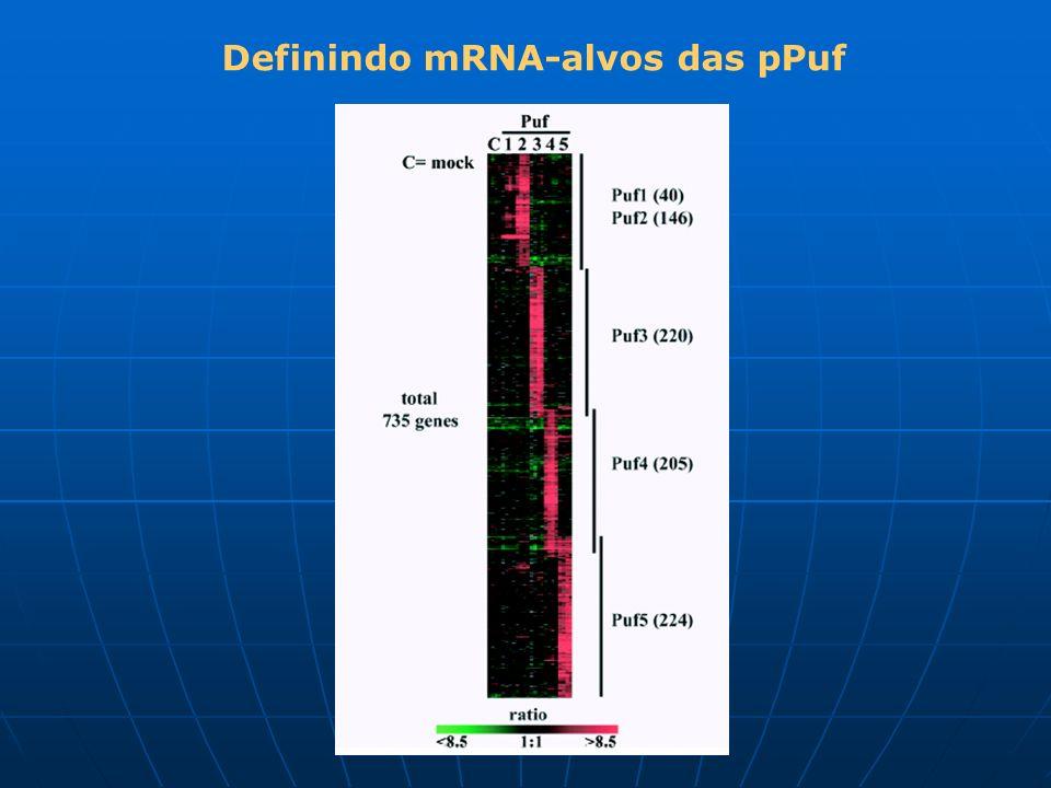 Definindo mRNA-alvos das pPuf
