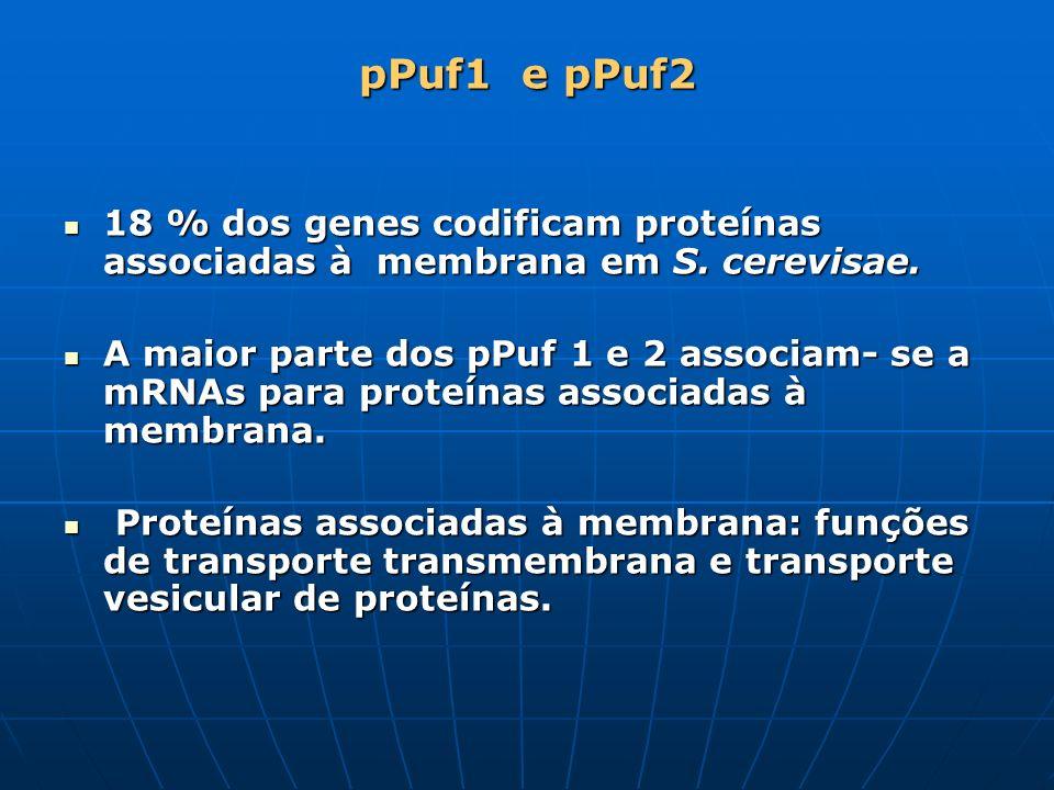 pPuf1 e pPuf2 18 % dos genes codificam proteínas associadas à membrana em S. cerevisae. 18 % dos genes codificam proteínas associadas à membrana em S.