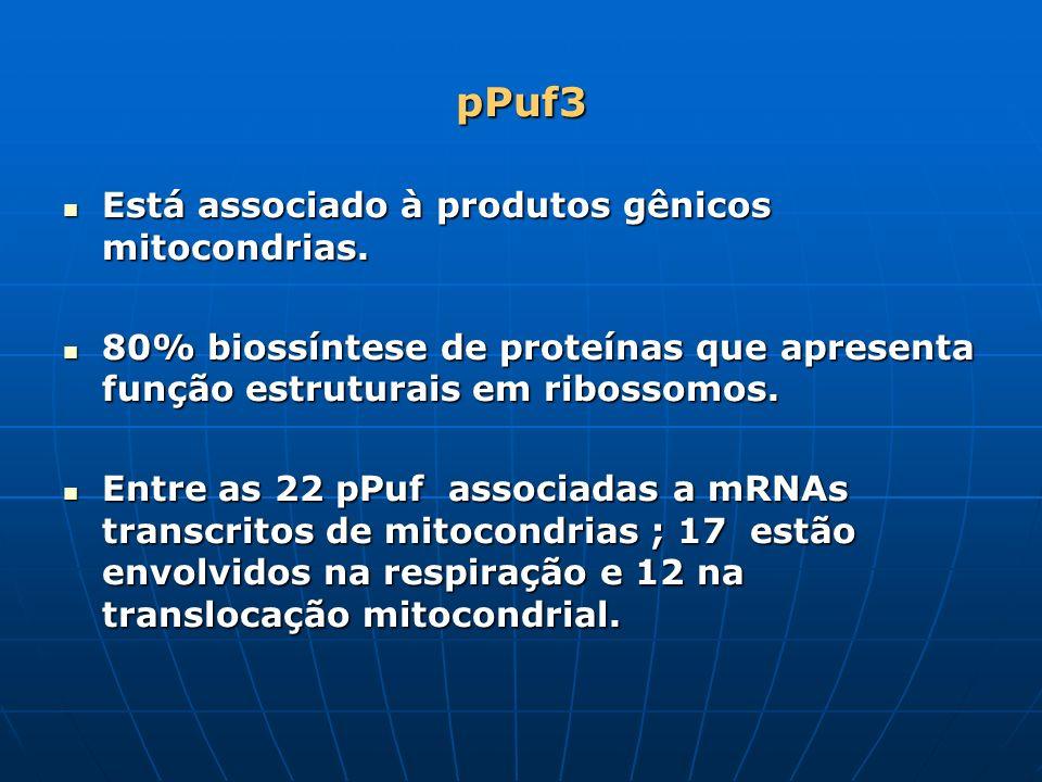 pPuf3 Está associado à produtos gênicos mitocondrias. Está associado à produtos gênicos mitocondrias. 80% biossíntese de proteínas que apresenta funçã