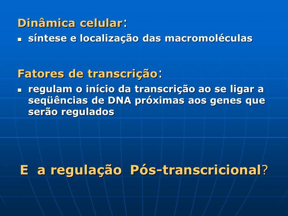 Dinâmica celular : síntese e localização das macromoléculas síntese e localização das macromoléculas Fatores de transcrição : regulam o início da tran