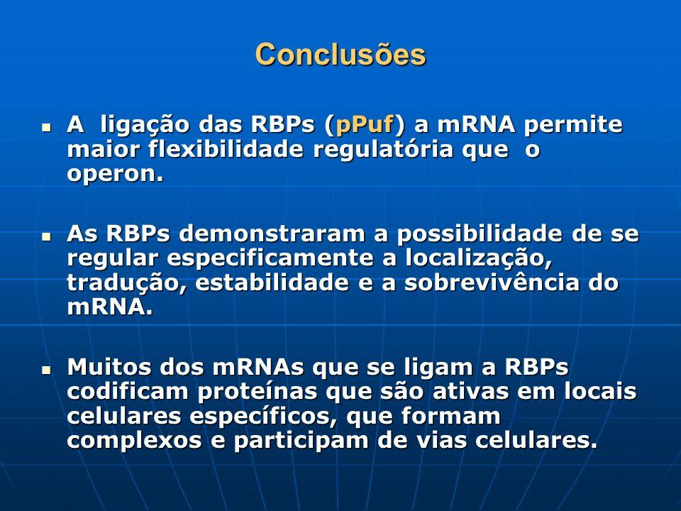 Conclusões A ligação das RBPs (pPuf) a mRNA permite maior flexibilidade regulatória que o operon. A ligação das RBPs (pPuf) a mRNA permite maior flexi