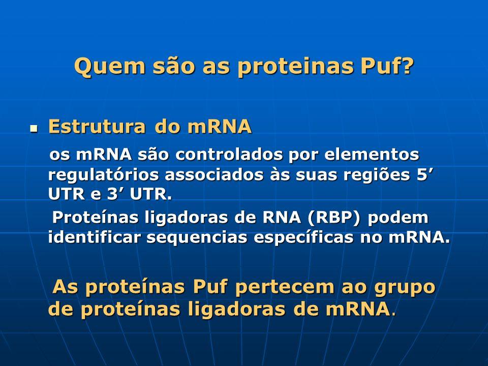Quem são as proteinas Puf? Estrutura do mRNA Estrutura do mRNA os mRNA são controlados por elementos regulatórios associados às suas regiões 5 UTR e 3