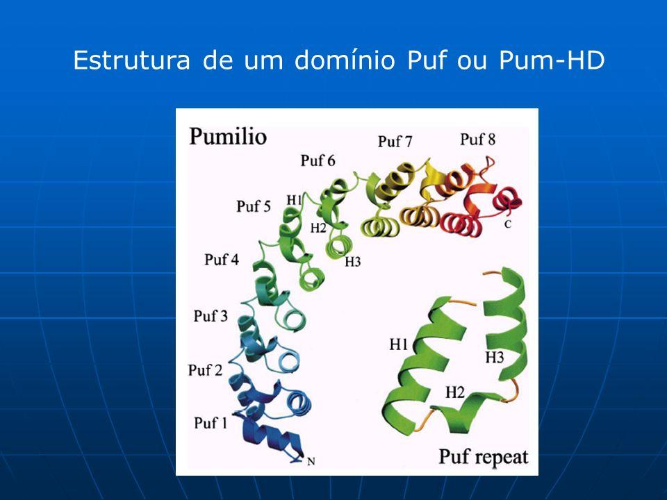 Estrutura de um domínio Puf ou Pum-HD