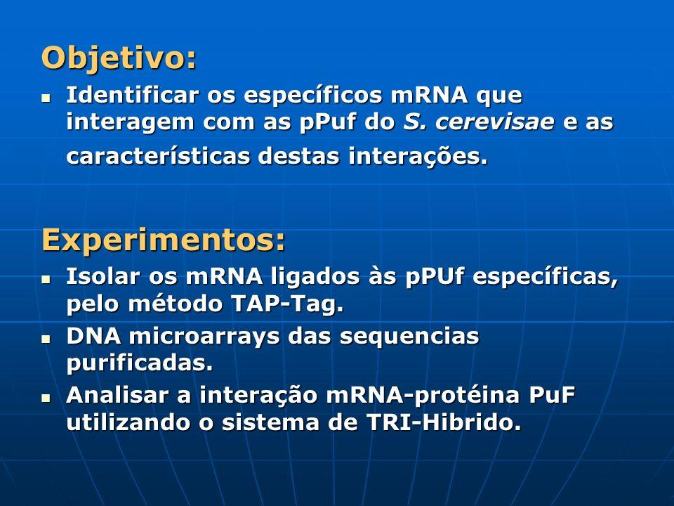 Objetivo: Identificar os específicos mRNA que interagem com as pPuf do S. cerevisae e as características destas interações. Identificar os específicos