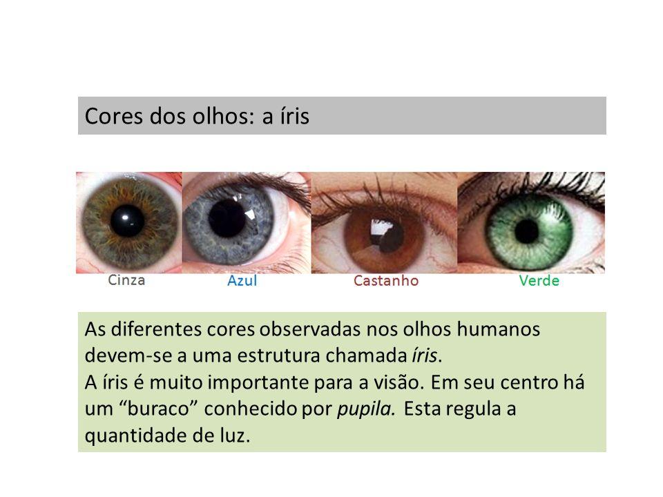 Cores dos olhos: a íris As diferentes cores observadas nos olhos humanos devem-se a uma estrutura chamada íris. A íris é muito importante para a visão