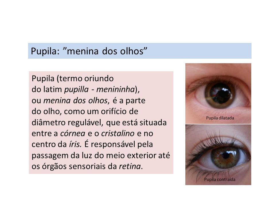 Pupila: menina dos olhos Pupila (termo oriundo do latim pupilla - menininha), ou menina dos olhos, é a parte do olho, como um orifício de diâmetro reg