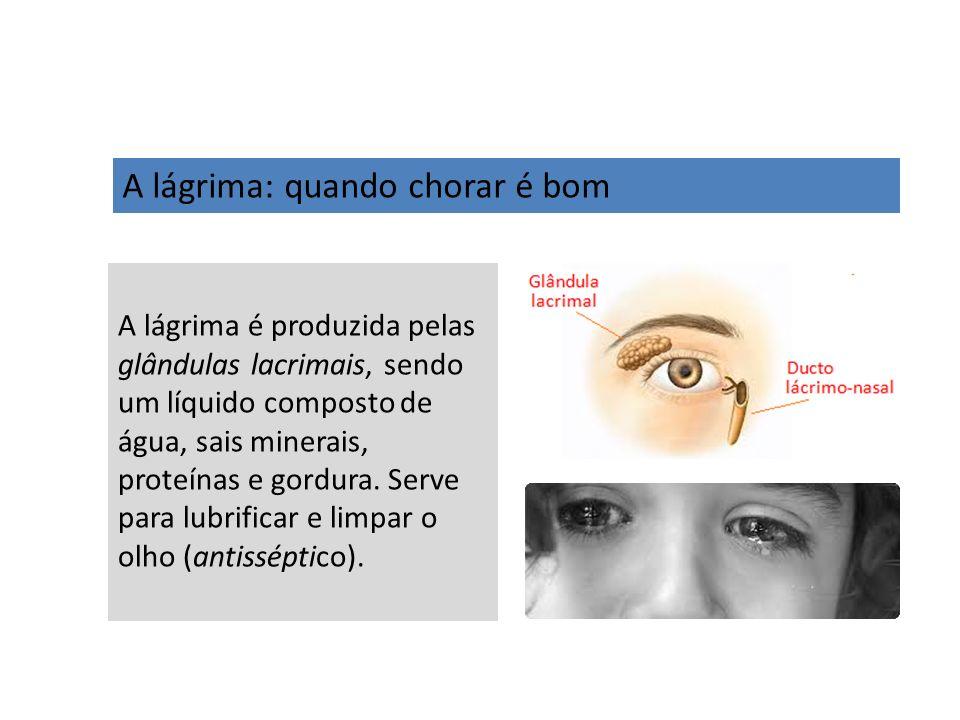 A lágrima: quando chorar é bom A lágrima é produzida pelas glândulas lacrimais, sendo um líquido composto de água, sais minerais, proteínas e gordura.