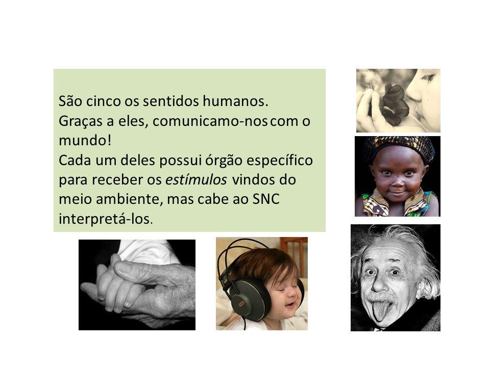 São cinco os sentidos humanos. Graças a eles, comunicamo-nos com o mundo! Cada um deles possui órgão específico para receber os estímulos vindos do me