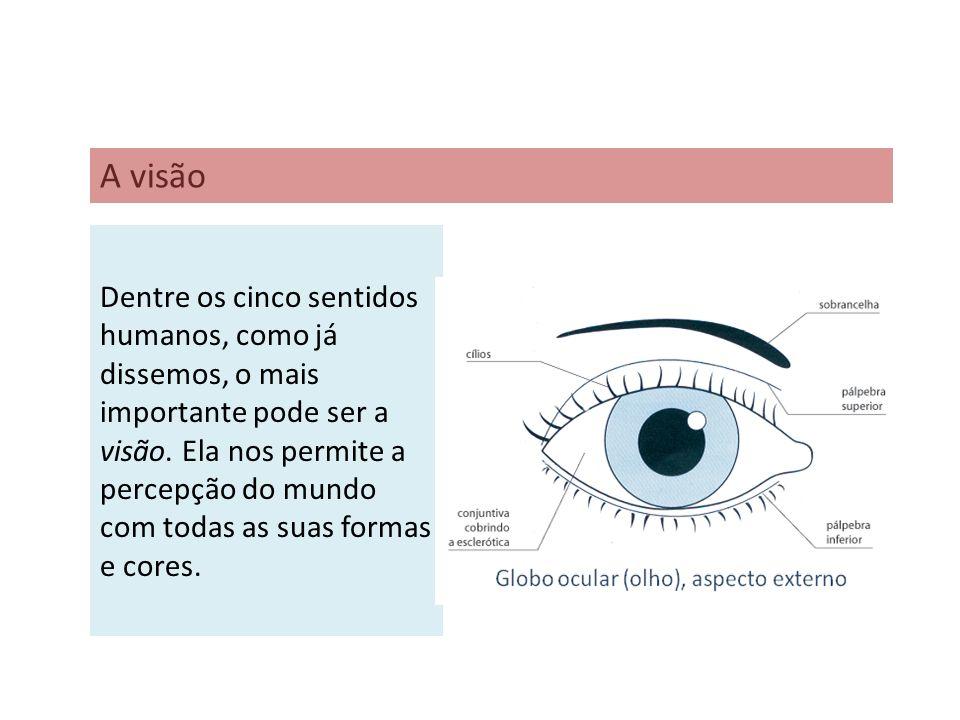 Dentre os cinco sentidos humanos, como já dissemos, o mais importante pode ser a visão. Ela nos permite a percepção do mundo com todas as suas formas