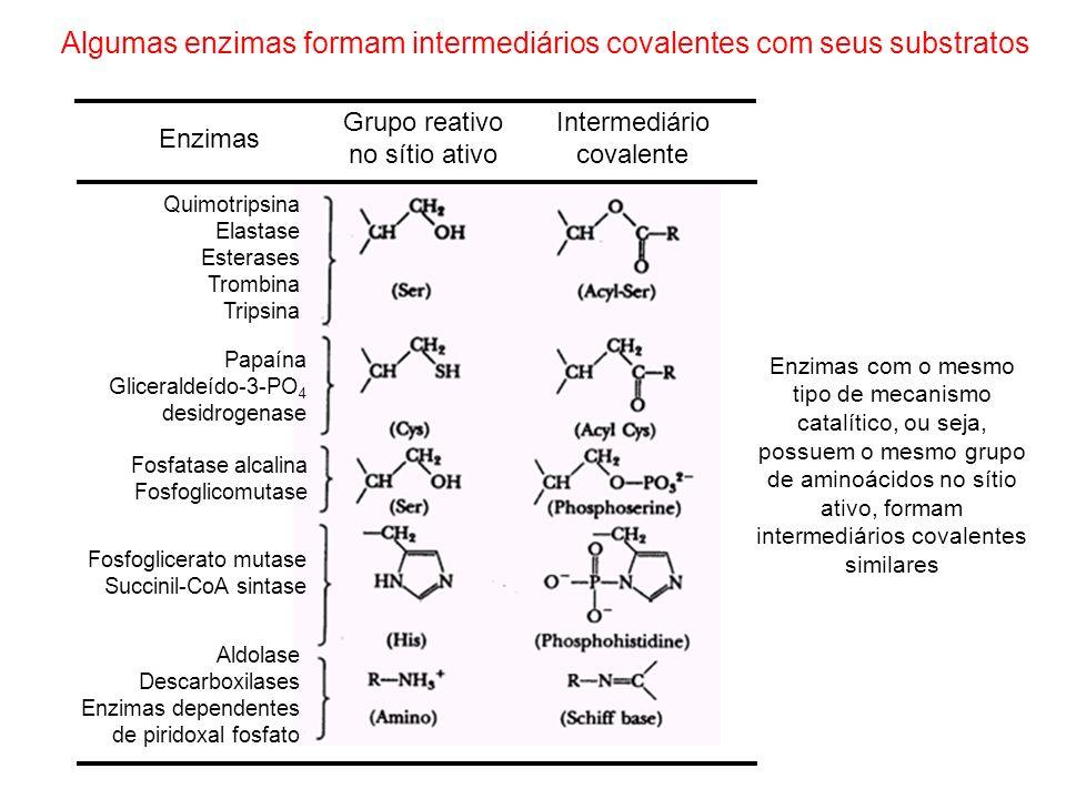 Algumas enzimas formam intermediários covalentes com seus substratos Quimotripsina Elastase Esterases Trombina Tripsina Papaína Gliceraldeído-3-PO 4 d