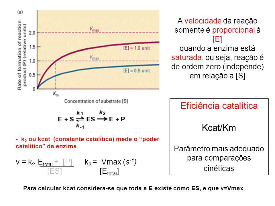 A velocidade da reação somente é proporcional à [E] quando a enzima está saturada, ou seja, reação é de ordem zero (independe) em relação a [S] Eficiê