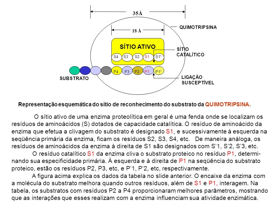 Representação esquemática do sítio de reconhecimento do substrato da QUIMOTRIPSINA. SÍTIO ATIVO S4 S3 S2 S1 S1¹ 18 Å 35Å SÍTIO CATALÍTICO LIGAÇÃO SUSC