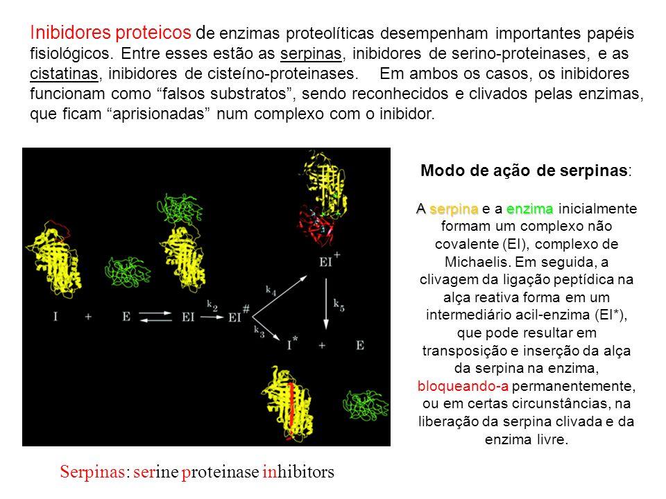 Serpinas: serine proteinase inhibitors Modo de ação de serpinas: A serpinaenzima A serpina e a enzima inicialmente formam um complexo não covalente (E