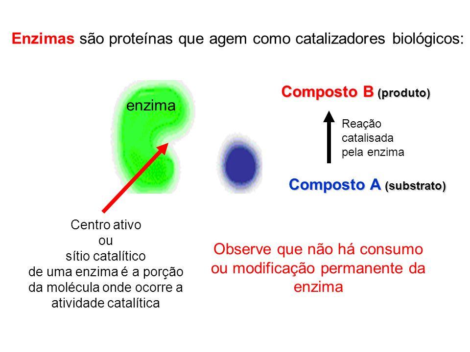 Enzimas são proteínas que agem como catalizadores biológicos: enzima Composto A (substrato) Composto B (produto) Centro ativo ou sítio catalítico de u