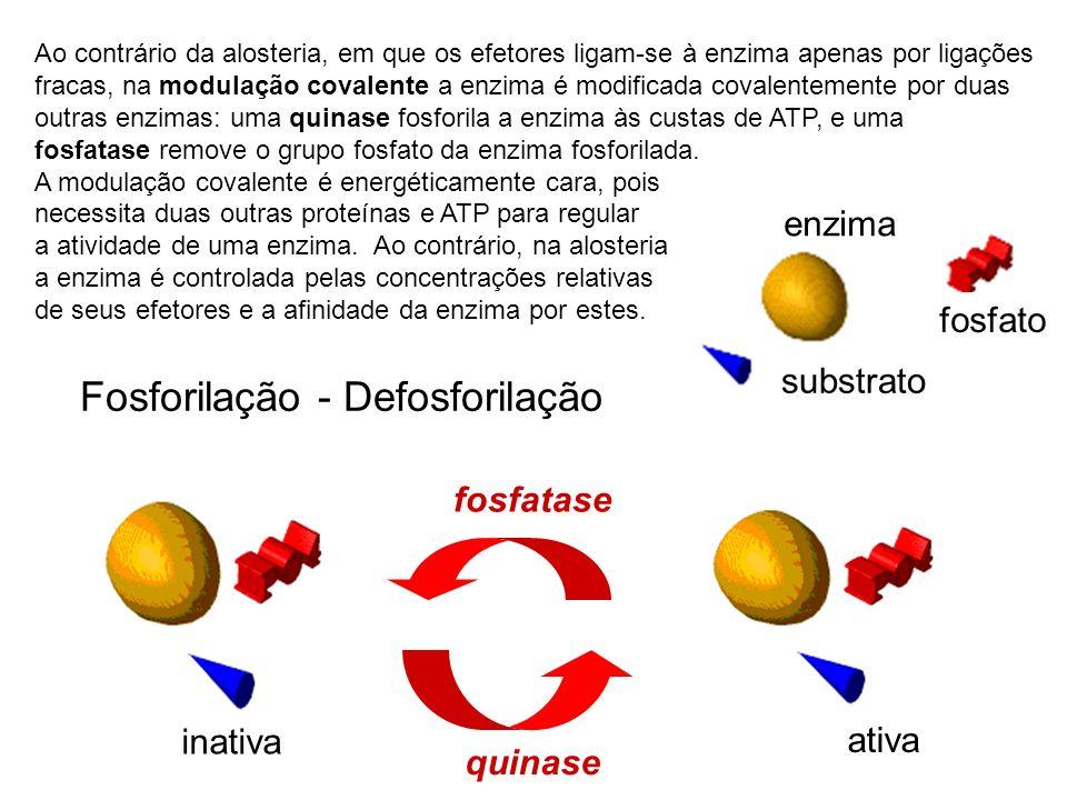 inativa ativa Fosforilação - Defosforilação quinase fosfatase enzima fosfato substrato Ao contrário da alosteria, em que os efetores ligam-se à enzima