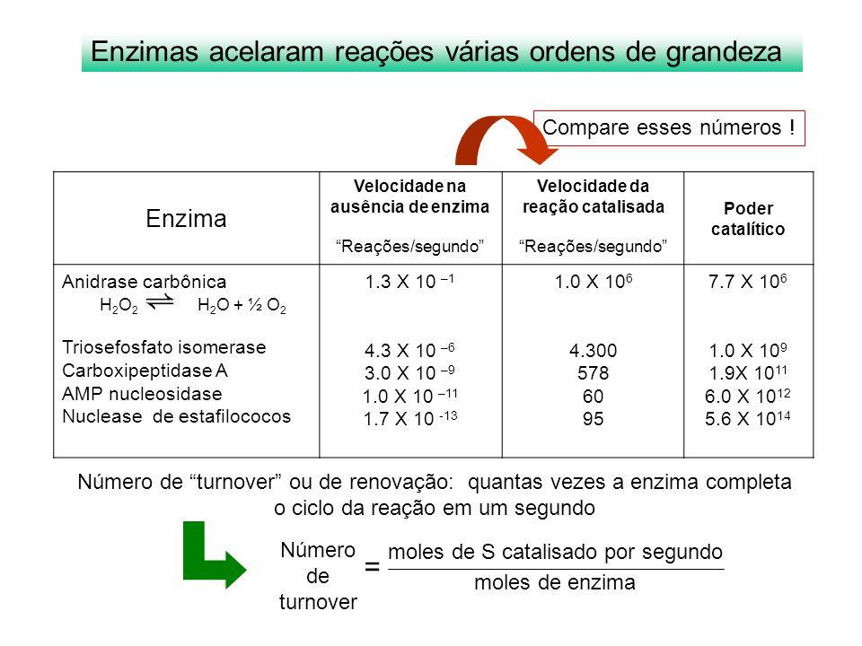 Enzima Velocidade na ausência de enzima Reações/segundo Velocidade da reação catalisada Reações/segundo Poder catalítico Anidrase carbônica H 2 O 2 H