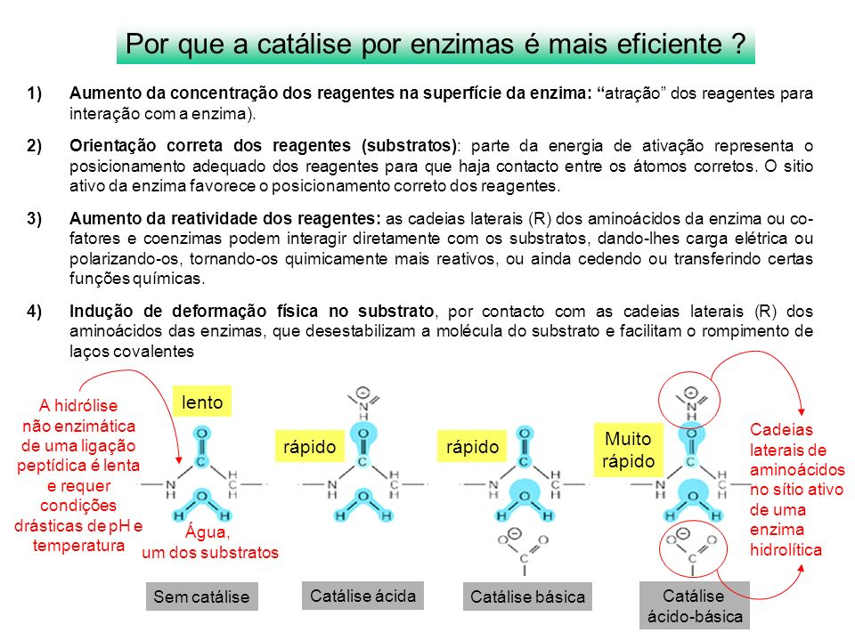 Por que a catálise por enzimas é mais eficiente ? 1)Aumento da concentração dos reagentes na superfície da enzima: atração dos reagentes para interaçã