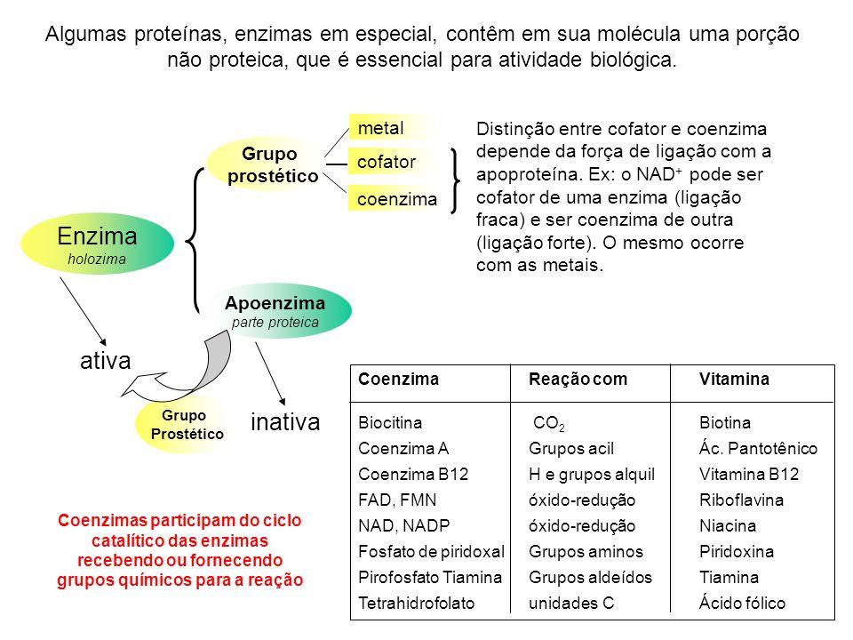 Enzima holozima Apoenzima parte proteica Grupo prostético metal coenzima cofator Coenzima Reação com Vitamina Biocitina CO 2 Biotina Coenzima A Grupos