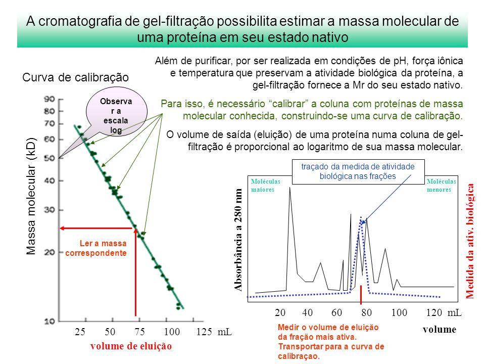 Absorbância a 280 nm volume Medida da ativ. biológica Moléculas maiores Moléculas menores Kav Massa molecular (kD) 20 40 60 80 100 120 mL 25 50 75 100