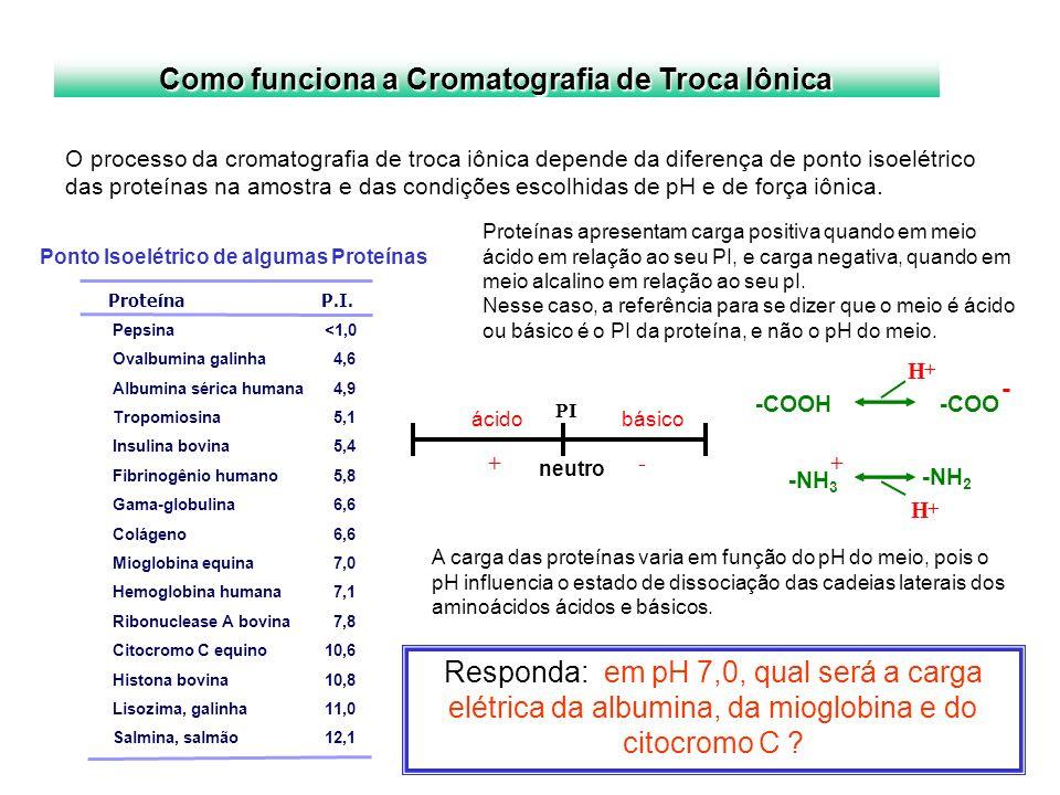 PI ácido + básico - neutro -COOH -COO -NH 3 H + + - H + -NH 2 Como funciona a Cromatografia de Troca Iônica O processo da cromatografia de troca iônic