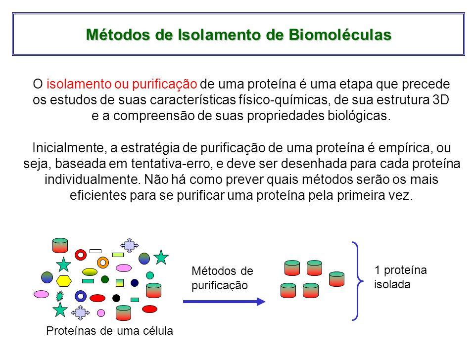 Métodos de Isolamento de Biomoléculas O isolamento ou purificação de uma proteína é uma etapa que precede os estudos de suas características físico-qu