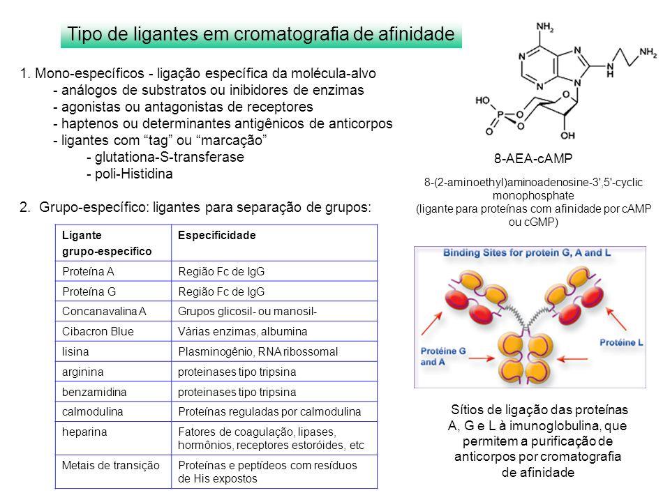 Ligante grupo-específico Especificidade Proteína ARegião Fc de IgG Proteína GRegião Fc de IgG Concanavalina AGrupos glicosil- ou manosil- Cibacron Blu