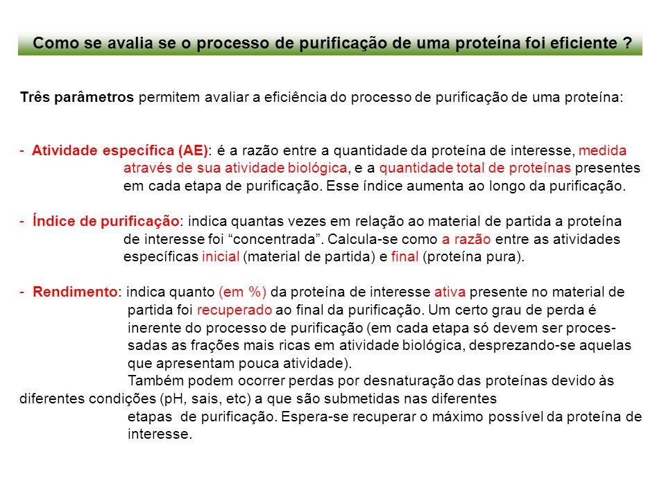Como se avalia se o processo de purificação de uma proteína foi eficiente ? Três parâmetros permitem avaliar a eficiência do processo de purificação d