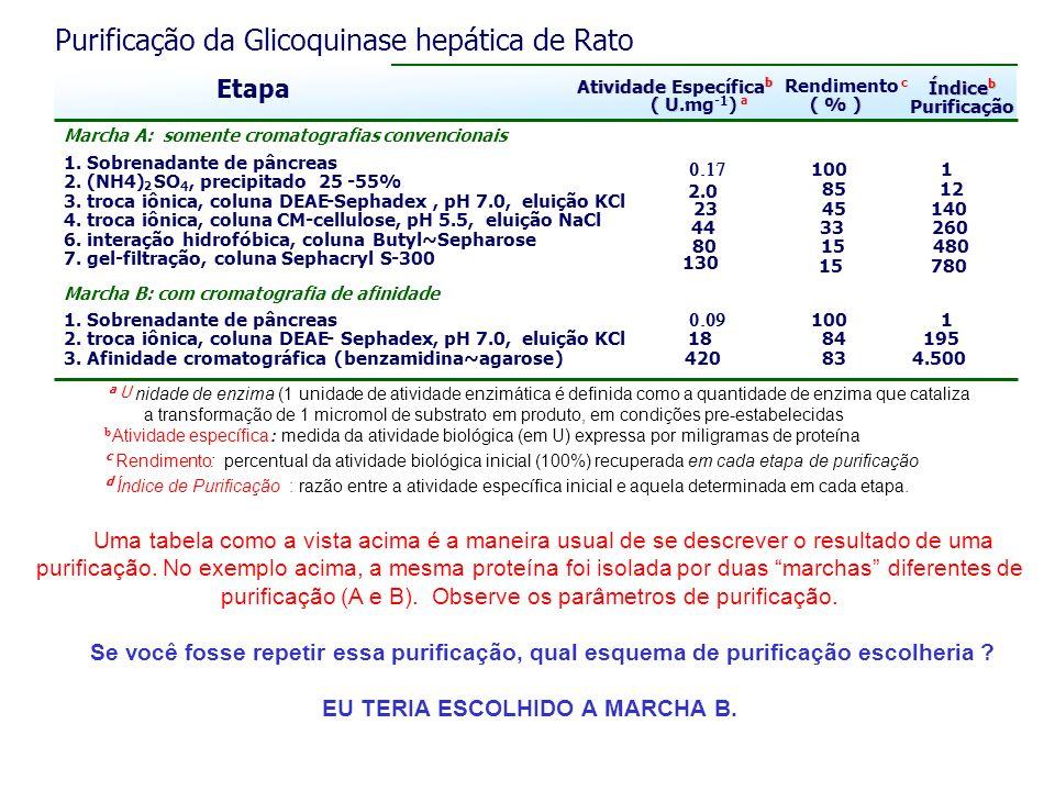 Purificação da Glicoquinase hepática de Rato Etapa Atividade Específica b b ( U ( U.mg -1 ).. - a Rendimento c ( % ) 100 1 2.0 8512 2345140 44 33 260