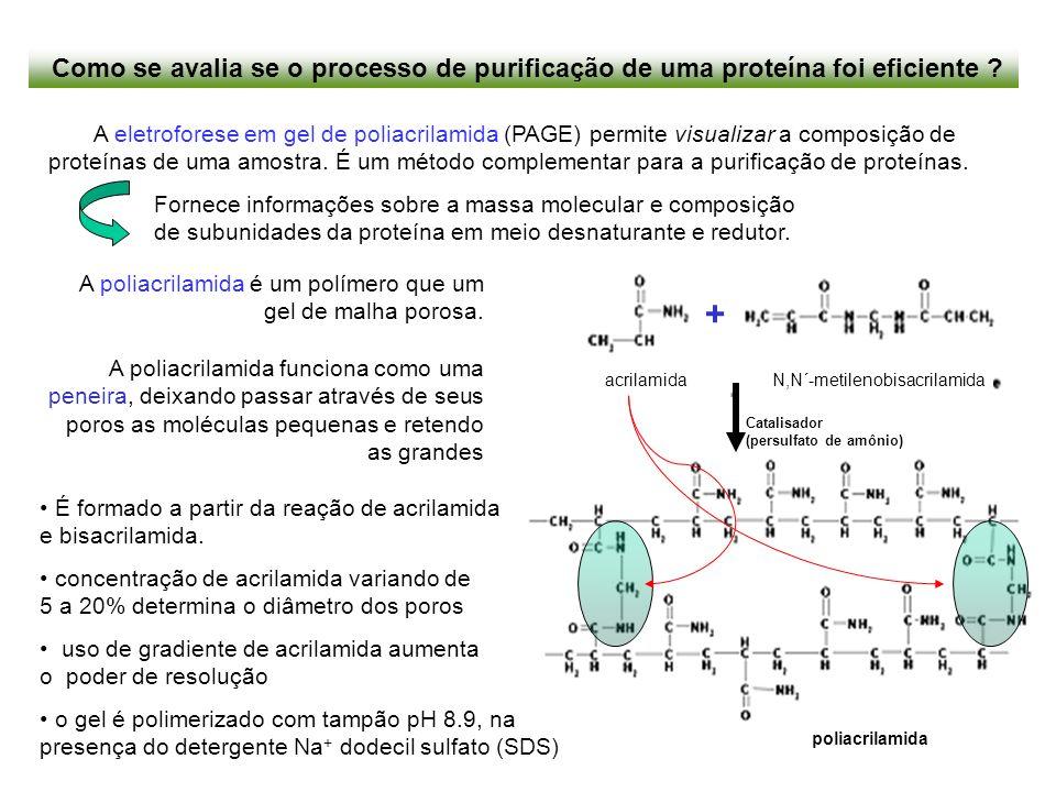 Como se avalia se o processo de purificação de uma proteína foi eficiente ? A eletroforese em gel de poliacrilamida (PAGE) permite visualizar a compos