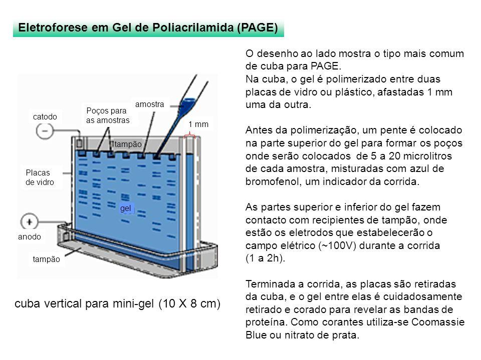 Eletroforese em Gel de Poliacrilamida (PAGE) cuba vertical para mini-gel (10 X 8 cm) O desenho ao lado mostra o tipo mais comum de cuba para PAGE. Na