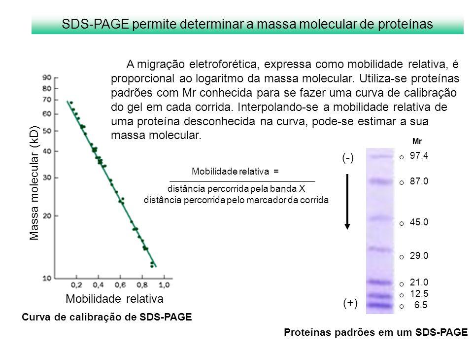 SDS-PAGE permite determinar a massa molecular de proteínas Mobilidade relativa Massa molecular (kD) Mobilidade relativa = distância percorrida pela ba