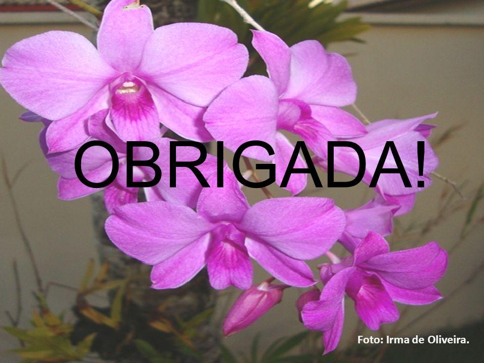 14/11/2013 OBRIGADA! Foto: Irma de Oliveira.