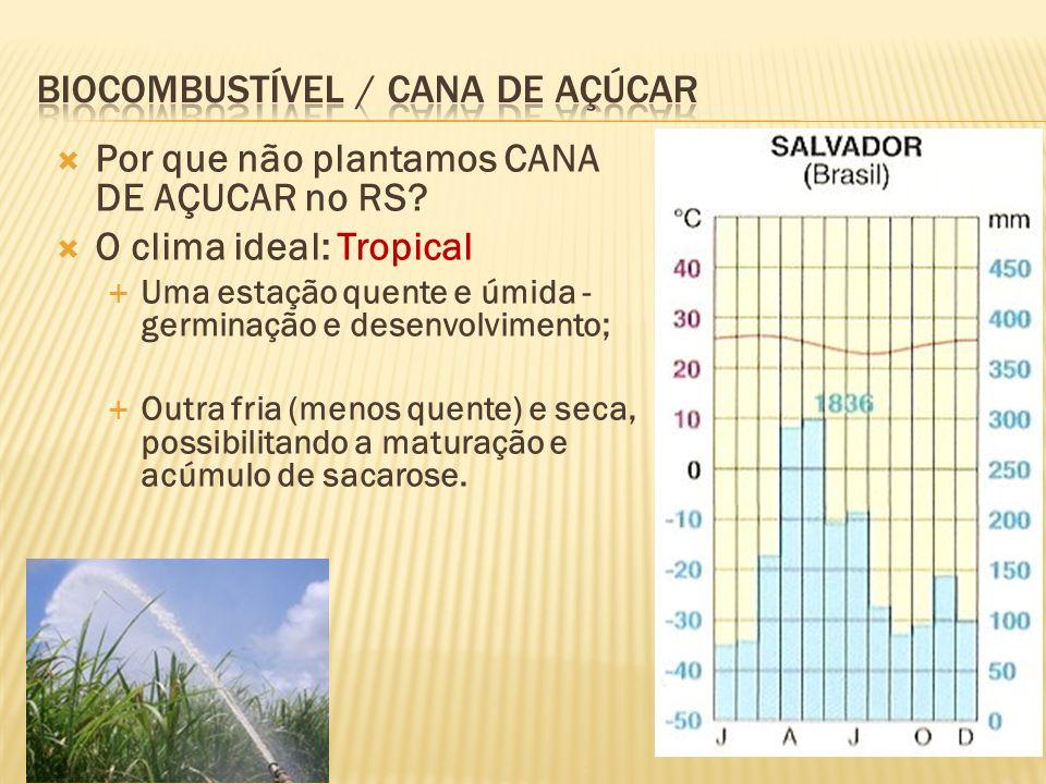Por que não plantamos CANA DE AÇUCAR no RS? O clima ideal: Tropical Uma estação quente e úmida - germinação e desenvolvimento; Outra fria (menos quent