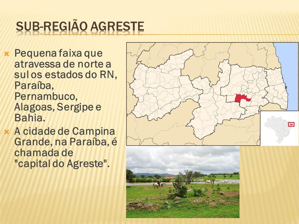 Pequena faixa que atravessa de norte a sul os estados do RN, Paraíba, Pernambuco, Alagoas, Sergipe e Bahia. A cidade de Campina Grande, na Paraíba, é