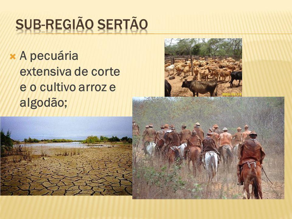A pecuária extensiva de corte e o cultivo arroz e algodão;