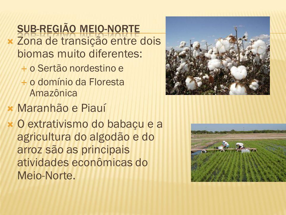 Zona de transição entre dois biomas muito diferentes: o Sertão nordestino e o domínio da Floresta Amazônica Maranhão e Piauí O extrativismo do babaçu e a agricultura do algodão e do arroz são as principais atividades econômicas do Meio-Norte.