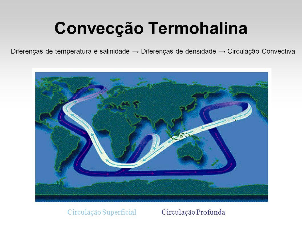 Convecção Termohalina Diferenças de temperatura e salinidade Diferenças de densidade Circulação Convectiva Circulação SuperficialCirculação Profunda