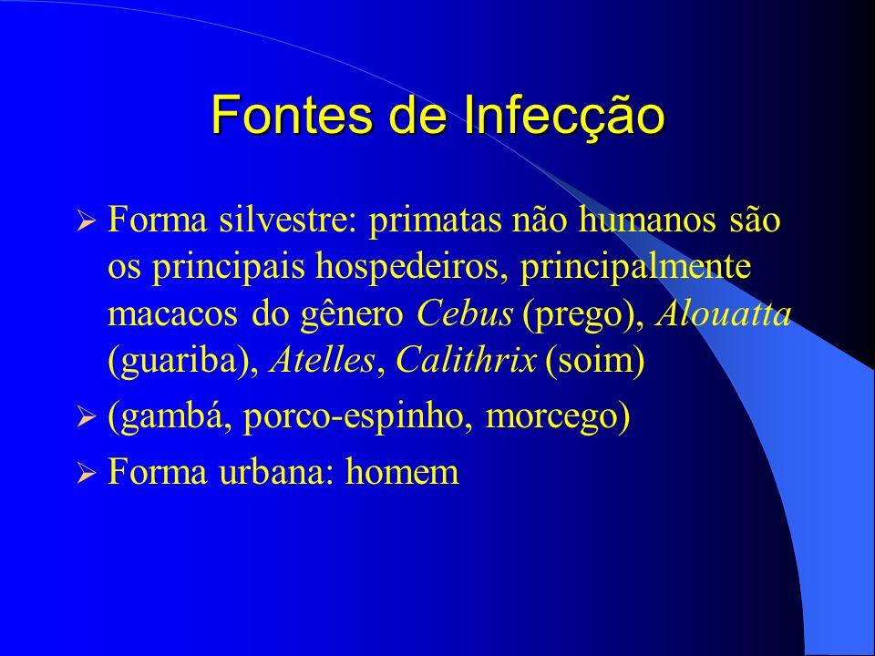 Fontes de Infecção Forma silvestre: primatas não humanos são os principais hospedeiros, principalmente macacos do gênero Cebus (prego), Alouatta (guar