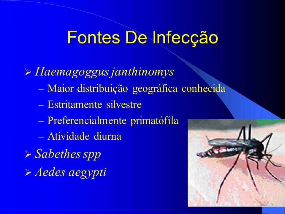 Fontes De Infecção Haemagoggus janthinomys – Maior distribuição geográfica conhecida – Estritamente silvestre – Preferencialmente primatófila – Ativid