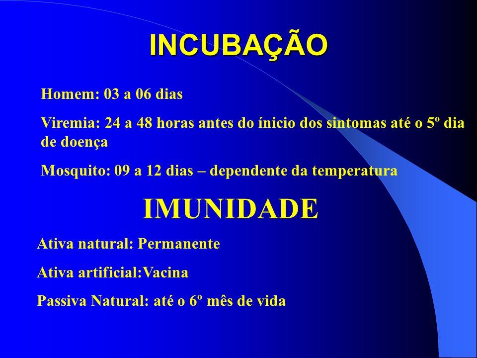 INCUBAÇÃO Homem: 03 a 06 dias Viremia: 24 a 48 horas antes do ínicio dos sintomas até o 5º dia de doença Mosquito: 09 a 12 dias – dependente da temper