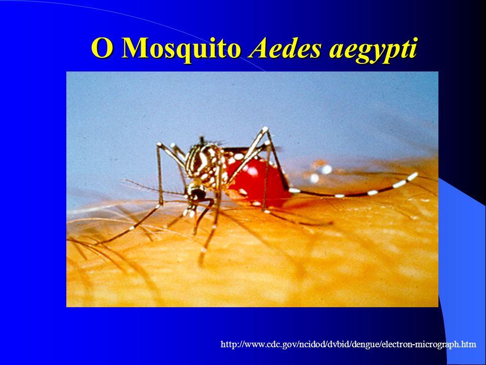 O Mosquito Aedes aegypti http://www.cdc.gov/ncidod/dvbid/dengue/electron-micrograph.htm