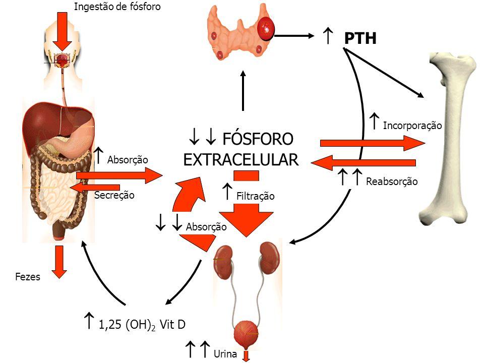 Ingestão de fósforo Fezes Absorção Secreção PTH Reabsorção 1,25 (OH) 2 Vit D Incorporação FÓSFORO EXTRACELULAR Absorção Urina Filtração