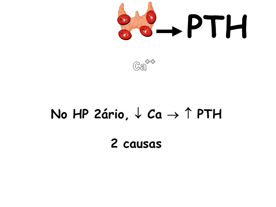 No HP 2ário, Ca PTH 2 causas PTH